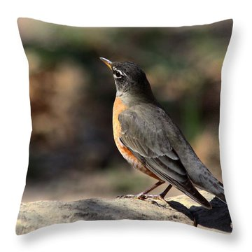 American Robin On Rock Throw Pillow by Sheila Brown