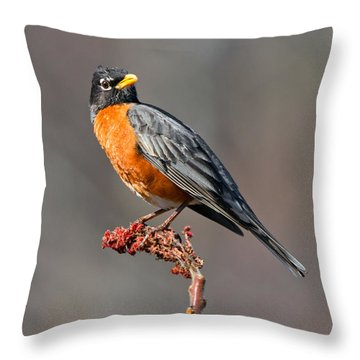 American Robin Throw Pillow by Timothy McIntyre