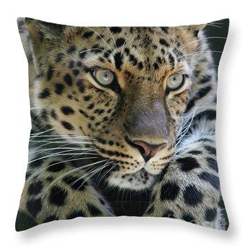 Amur Leopard #2 Throw Pillow