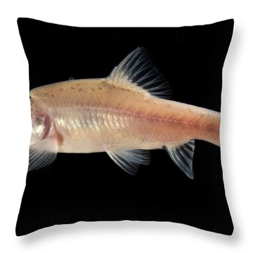 Angled Golden Line Barbel Throw Pillow