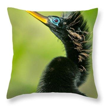 Anhinga Anhinga Anhinga, Tortuguero Throw Pillow by Panoramic Images