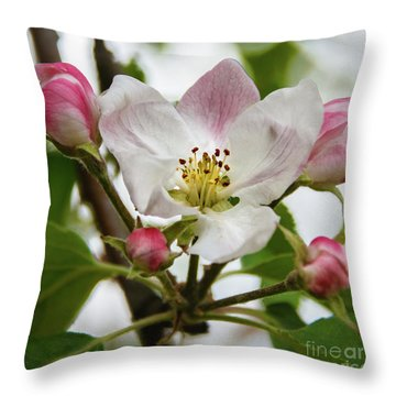 Apple Blossom Throw Pillow by Robert Bales