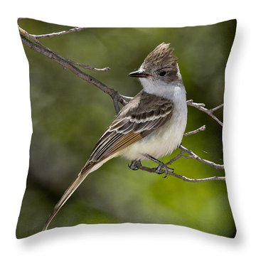 Ash-throated Flycatcher Throw Pillow by Anthony Mercieca