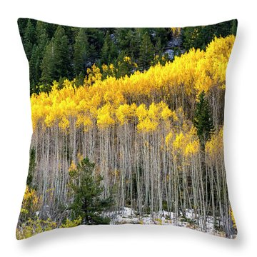 Aspen Trees In Fall Color Throw Pillow
