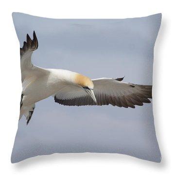 Australasian Gannet In Flight Throw Pillow