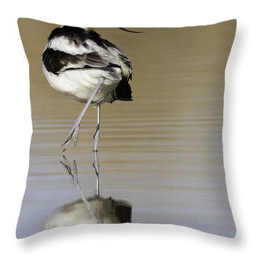 Avocet Looking Back Throw Pillow