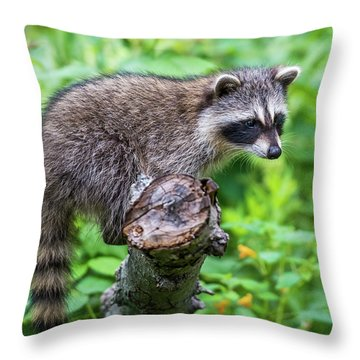 Throw Pillow featuring the photograph Baby Racoon by Paul Freidlund