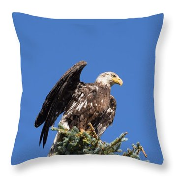 Throw Pillow featuring the photograph Bald  Eagle Juvenile Ready To Fly by Margarethe Binkley