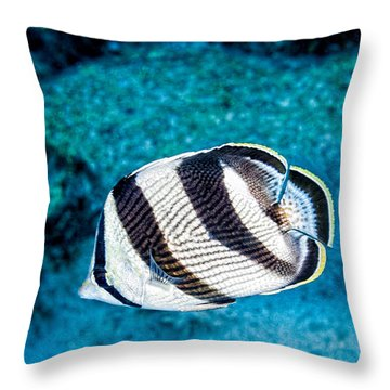 Throw Pillow featuring the photograph Banded Butterflyfish by Perla Copernik