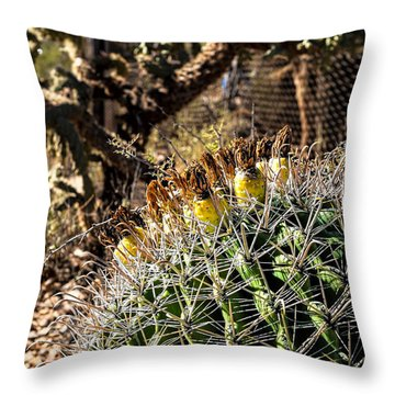 Barrel Cactus Throw Pillow by Lawrence Burry