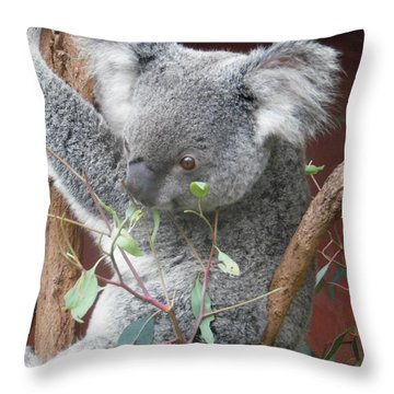 Beady Eyed Koala Throw Pillow