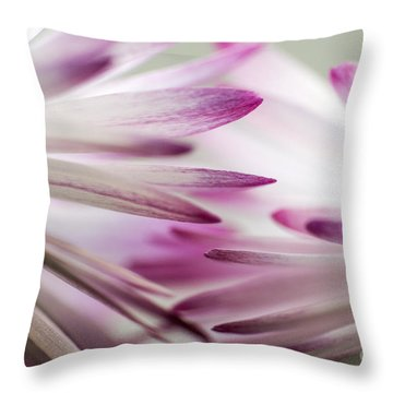 Beautiful Colorful Image About Daisy Flower Throw Pillow