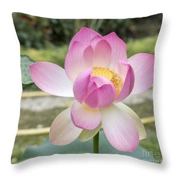 Beautiful Indian Lotus Throw Pillow