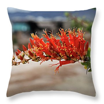 Throw Pillow featuring the photograph Beautiful Ocotillo by Robert Bales
