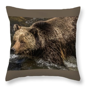 Beryl Springs Sow In The River Throw Pillow