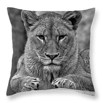 Big Cat Lion Collection Throw Pillow