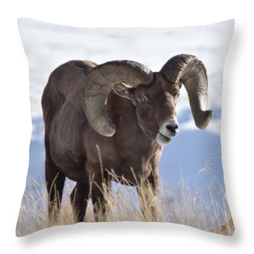 Throw Pillow featuring the photograph Big Horn Sheep by Margarethe Binkley