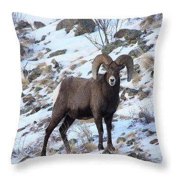Bighorn7 Throw Pillow