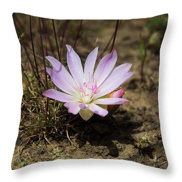 Kittitas County Throw Pillows