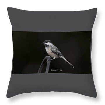 Black-capped Chickadee Throw Pillow by Diane Giurco