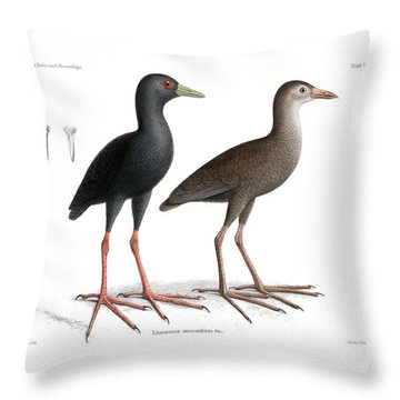 Throw Pillow featuring the drawing Black Crake, Zapornia Flavirostra by J D L Franz Wagner
