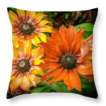 Black-eyed Susan Throw Pillow