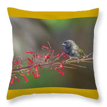 Black-faced Grassquit Throw Pillow