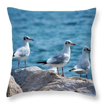 Black-headed Gulls, Chroicocephalus Ridibundus Throw Pillow by Elenarts - Elena Duvernay photo