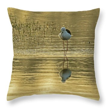 Black-winged Stilt Throw Pillow