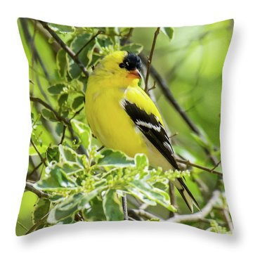 Throw Pillow featuring the photograph Blending In by Robert L Jackson