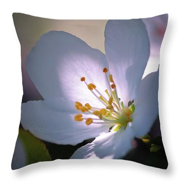 Throw Pillow featuring the photograph Blossom In The Sun by David Perry Lawrence