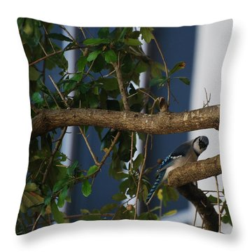 Throw Pillow featuring the photograph Blue Bird by Rob Hans