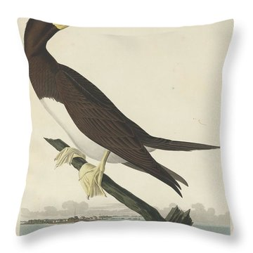 Booby Gannet Throw Pillow by Rob Dreyer
