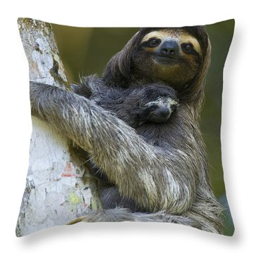 Throw Pillow featuring the photograph Brown-throated Three-toed Sloth by Suzi Eszterhas
