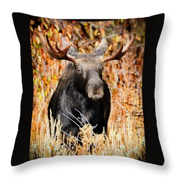 Bull Moose Throw Pillow