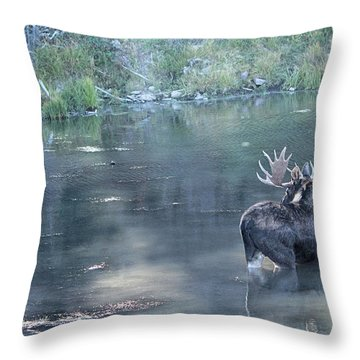 Bull Moose Reflection Throw Pillow