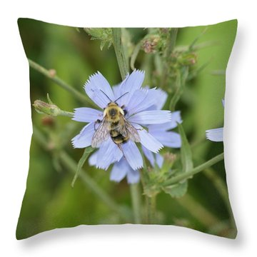 Bumble Bee Throw Pillow by Heidi Poulin