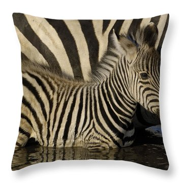 Burchells Zebra Equus Burchellii Foal Throw Pillow