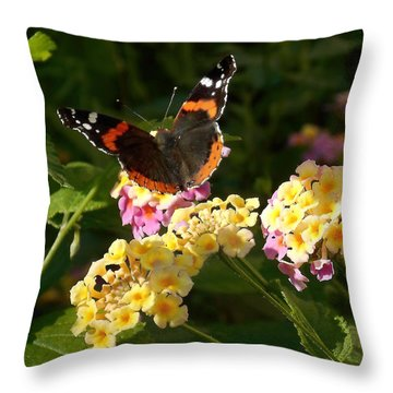 Throw Pillow featuring the photograph Busy Butterfly Side 2 by Felipe Adan Lerma