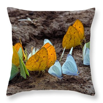 Butterflies Eating Minerals Throw Pillow by Aivar Mikko