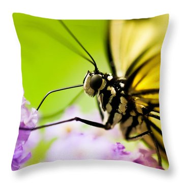 Butterfly Throw Pillow by Sebastian Musial
