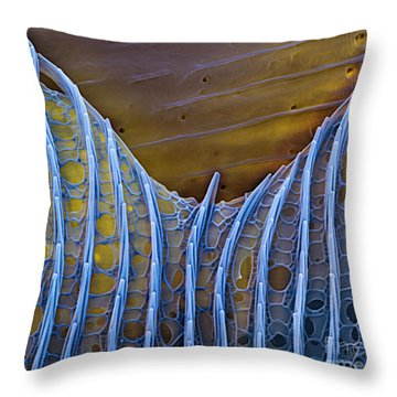 Butterfly Wing Scale Sem Throw Pillow by Eye of Science