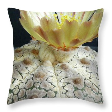 Cactus Flower 1 Throw Pillow by Selena Boron