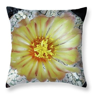 Cactus Flower 2 Throw Pillow by Selena Boron