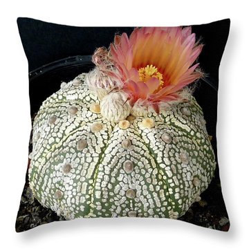 Cactus Flower 4 Throw Pillow by Selena Boron