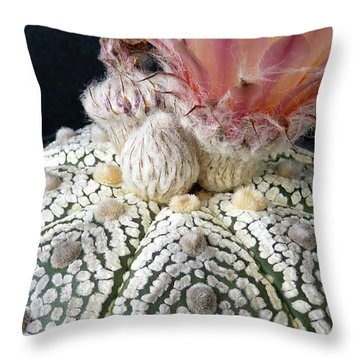 Cactus Flower 6 Throw Pillow by Selena Boron