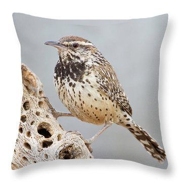 Cactus Wren And Cholla Rib  Throw Pillow