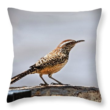 Throw Pillow featuring the photograph Cactus Wren by Robert Bales