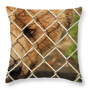 Caged Bear Throw Pillow