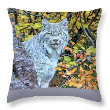 Canada Lynx Throw Pillow by Jack Bell
